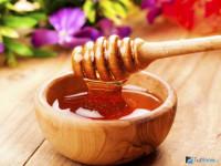 Мед: польза и вред для здоровья организма. Как правильно выбирать и использовать мед?