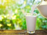 Польза от молока и вред: как выбрать свежее, нюансы применения и обзор лучших коктейлей (130 фото и видео)